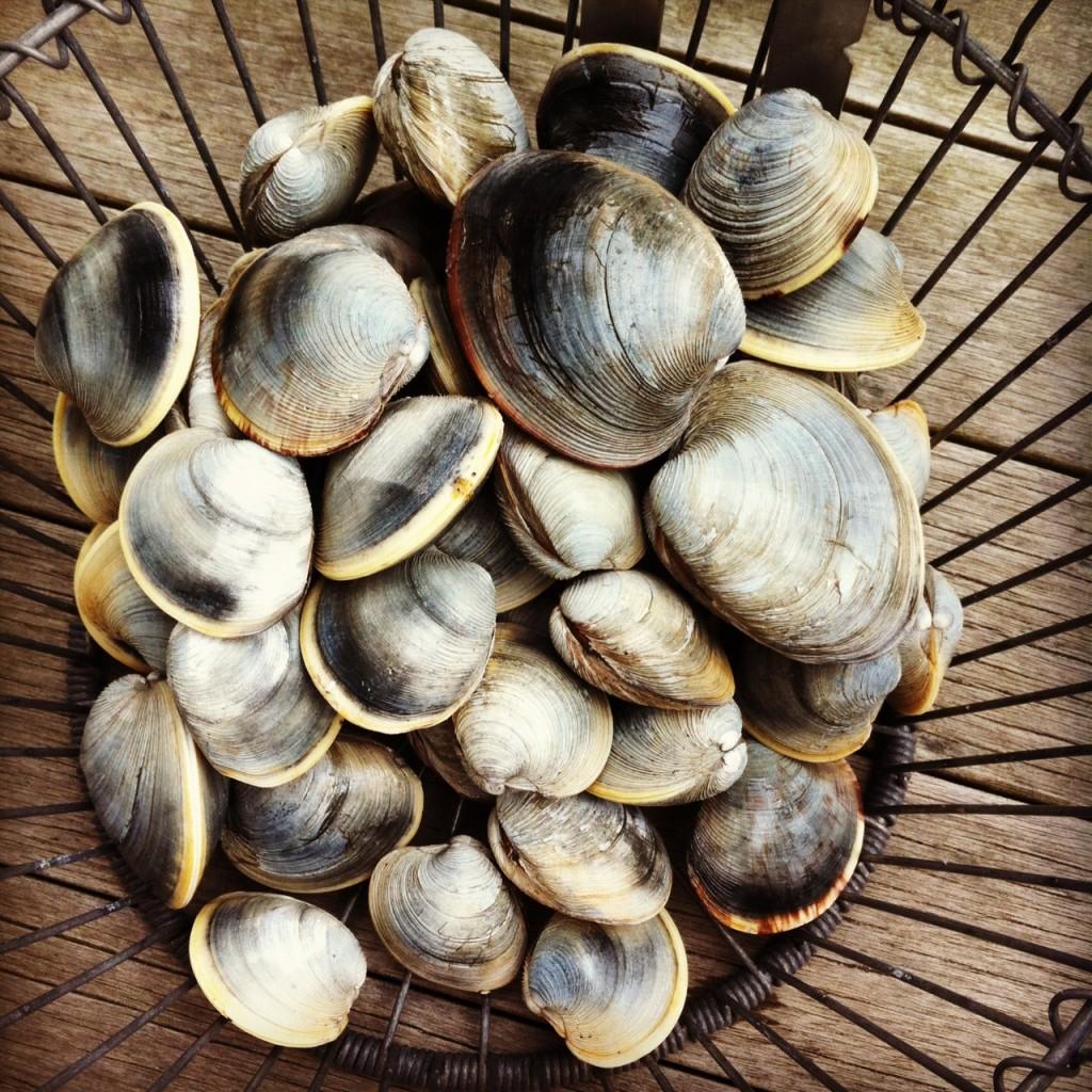 Clam Bushel by Karen Keller Capuciati